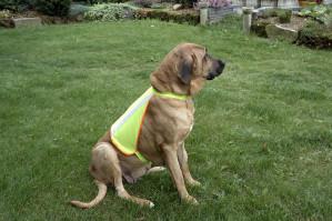 Reflexväst till hund