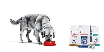royal canin hundfoder